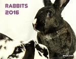Bunspace.com Rabbit Calendar 2016